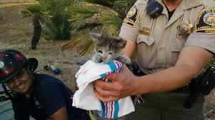 lexus san diego deals firefighters save feral kitten stuck in a lexus engine compartment