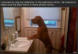 Looking In The Mirror Meme - awesome dog looking in mirror