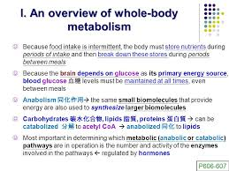 papier adh駸if cuisine an overview of whole metabolism 全身代謝總覽 ppt