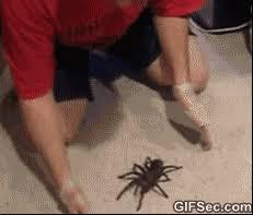 Huge Spider Memes Image Memes - gif huge spider viral viral videos