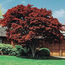 10 best trees shrubs for fall images on cut flowers
