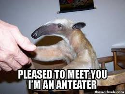 Anteater Meme - i m an anteater know your meme