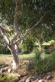 the most poisonous plants in australia hipages com au 25 best gardens images on pinterest australian native garden
