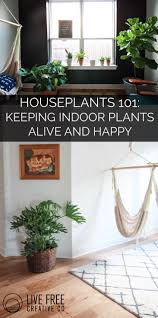 houseplants 101 how to keep houseplants alive and happy