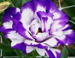 Pictures Of Beautiful Flowers In The World - most expensive flowers in the world flower world