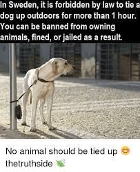 Law Dog Meme - in sweden it is forbidden by law to tie a dog up outdoors for more