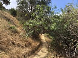 plant communities environmental nature center guide to visiting the oak canyon nature center in anaheim oc mom