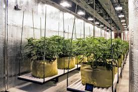 growing weed indoors stop dreaming start planting