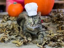 Pet Halloween Costumes Easy Diy Pet Halloween Costumes Vetdepot Blog
