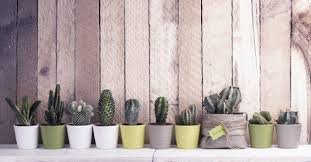 5 great tips on how to take care of succulents