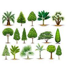 different types of trees different types of tree royalty free vector image