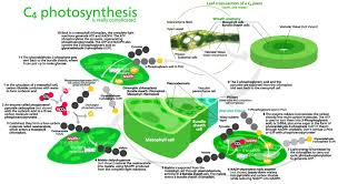 Photosynthesis Concept Map Energy And The Human Journey Where We Have Been Where We Can Go