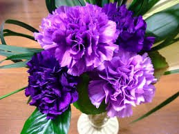 carnation flowers carnations facts types plant growing and caring tips