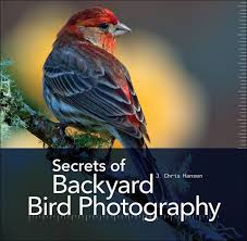 backyard bird 3 easy tips for better backyard bird photography mnn