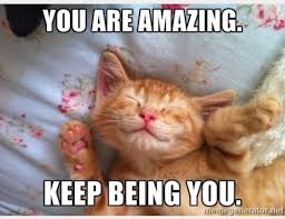 Random Cat Meme - encouraging cat meme the random vibez