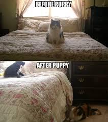 Twinkie Meme - twinkie meme by bruneydog on deviantart