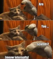 Parrot Meme - badass parrot www meme lol com funny gifs pinterest cat