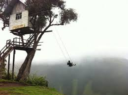 Cool Tree Houses 145 Best Tree Top Houses Images On Pinterest Amazing Tree House