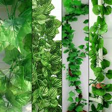 plants winsome long vine house plant x m long diy beautiful