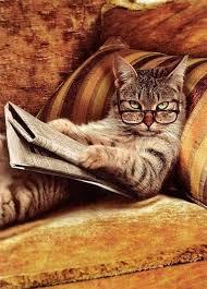 gatti divani divani usati perch礙 scegliere un negozio fisico mercatopoli