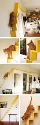 Wall Shelves For Cats Best 25 Cat Stairs Ideas On Pinterest Cat Climbing Shelves Cat