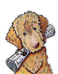doodle doo labradoodles 514 best my doodle images on smile and dogs