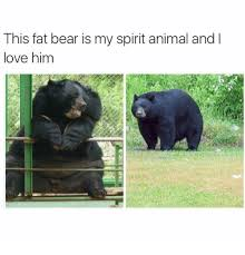 Funny Bear Meme - this fat bear is my spirit animal and l love him funny meme on me me