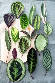 statement leaves justina blakeney leaves and plants