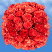 roses online cheap orange roses online high and orange roses global