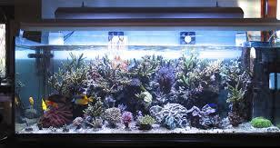 vasche acquario posizionamento di un acquario marino zanclus it
