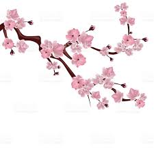 Meaning Of Pink Meaning Of The Japanese Cherry Blossom Tree