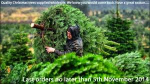 real trees we now deliver decorated