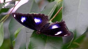 sensational butterflies 2017 natural history museum youtube