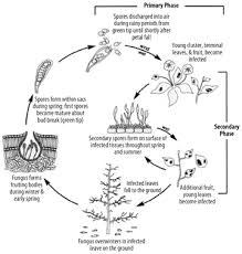 Plants Diseases And Treatment - the cedar mill news march 2011 identifying and combating plant