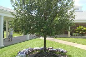 sjr state live oak