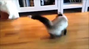 funny cats funny cat videos best cat funny video video
