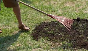 How To Cut Weeds In Backyard How To Replant Lawn Grass Lawn Repair Scotts