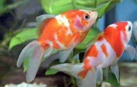 ornamental fishes attracting crowd kerala as seen from