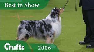 australian shepherd 2015 nationals australian shepherd wins best in show at crufts 2006 crufts