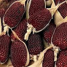 zea mays seed strawberry corn seeds