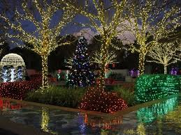 pinellas county holiday tradition at botanical gardens feather