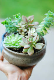 house plants that don t need light low plants that don t need light light houseplants plants that donut
