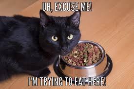 Sassy Cat Meme - cat memes damn sassy kitty wattpad
