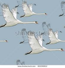 swan stock images royalty free images vectors