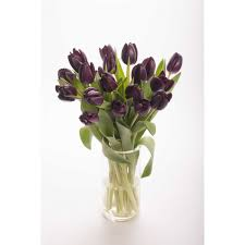 Tulip Bouquets Black Tulip Bouquet Tulip Bouquets Gifts Flower Muse