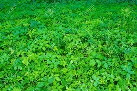forest glade with different plants green field of growing wild