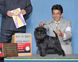 affenpinscher illinois dog show 2010 09 26