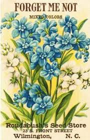 forget me not seed packets 11 best vintage seed packets images on vintage seed