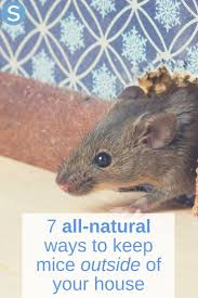 best 25 mice repellent ideas on pinterest mice control getting