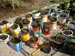 Ideas For Container Gardens Growing Veg In Containers Recycled Containers Recycled Tins